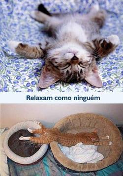 Gatos: Relaxam como ninguém