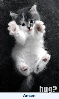 Gatos: Amam (Gato pedindo abraço)
