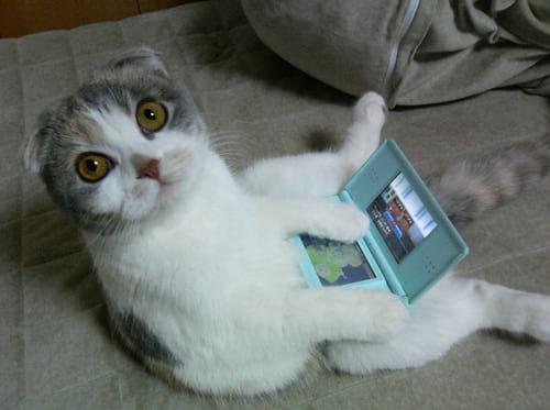 Gatinho jogando 3DS