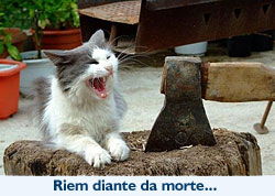 Gatos: Riem diante da morte