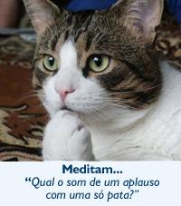 """Gatos: Meditam """"Qual o som de um aplauso com uma só pata?"""""""