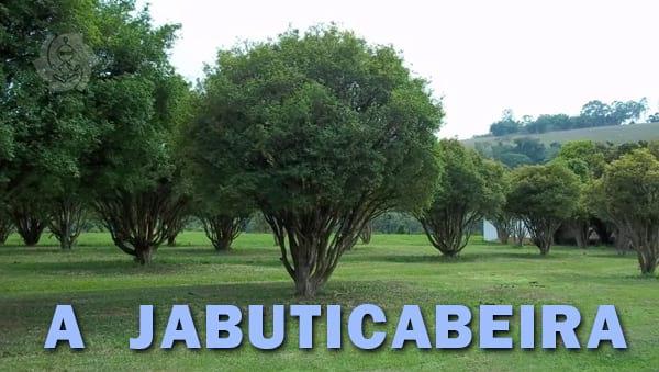A JABUTICABEIRA