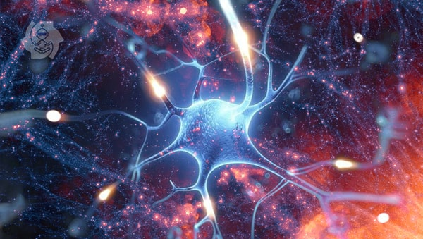 Neurônios (sinapses)